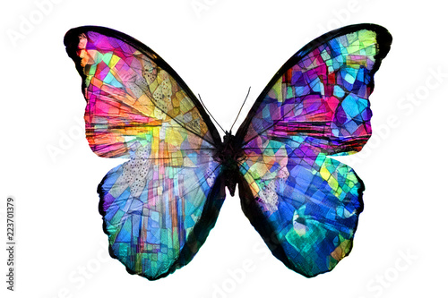 multicolored butterfly isolated on white background - 223701379