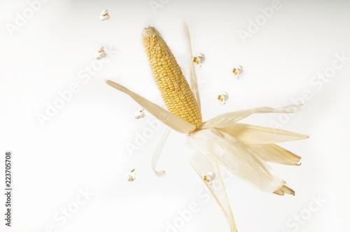 Obraz kolba kukurydzy na białym tle - fototapety do salonu