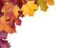 Autumn. Multicolored autumn leaves.