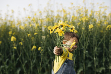 Little Boy's Hand Holding Picked Yellow Flowers In Front Of Rape Field