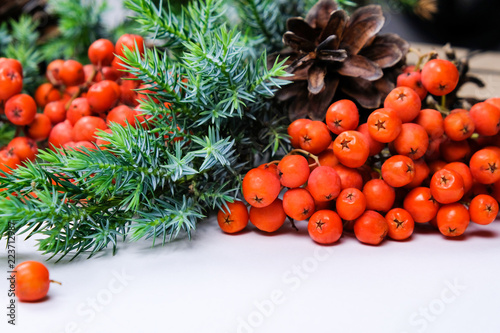 Fotografie, Obraz  Rowanberry, Red Berries, Spruce Branches