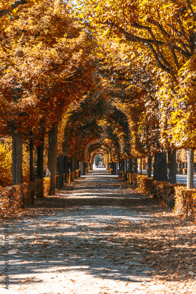 Fototapeta autumn alley in the park