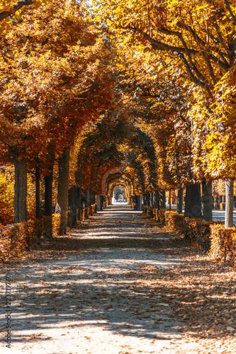 Slika na platnu autumn alley in the park