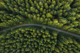 Fototapeta Na ścianę - Curved path in the forest view from a drone