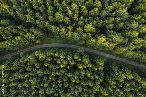 zakrzywiona-sciezka-w-lesie-widok-z-drona