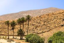 Oase Bei Betancuria Auf Fuerteventura