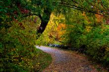 Path Through Park In Autumn Wi...