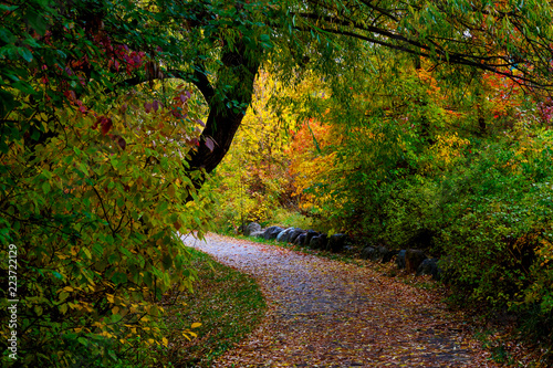 path through park in autumn with welcoming glow, Riverside Park, Whitefish, Mont Fototapet