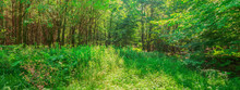 Landschaft Waldpanorama Waldlichtung Junger Laubwald Mitteleuropa - Landscape Forest Panorama Clearing Young Deciduous Forest Central Europe