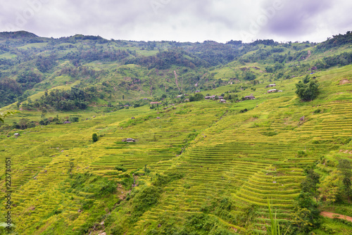 Tuinposter Pistache Terraces field in Hoang Su Phi, Ha Giang, Vietnam