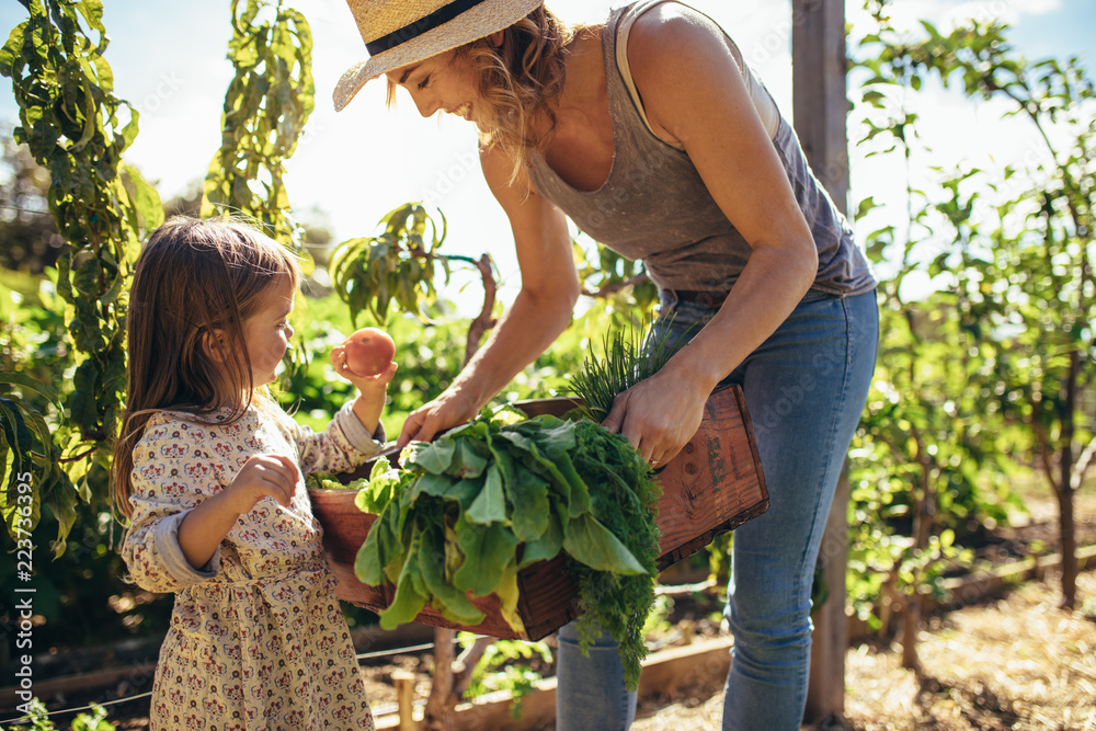 Fototapety, obrazy: Mother and daughter with fresh vegetable in farm