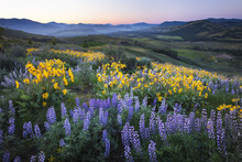 Miles Of Wildflowers Covering The Hills In Washington State During The Springtime
