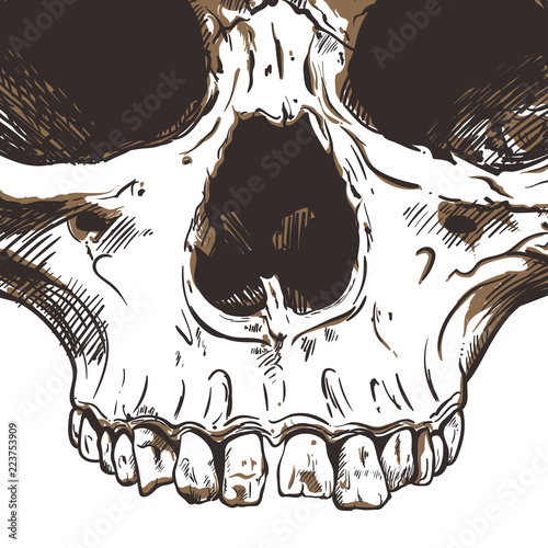 Valokuva  Human Skull Vector Art. Hand drawn illustration.