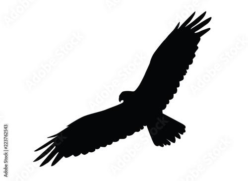 Obraz eagle - fototapety do salonu