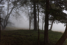 The Eerie Hill In The Forest I...