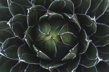 Closeup Of A Green Succulent P...