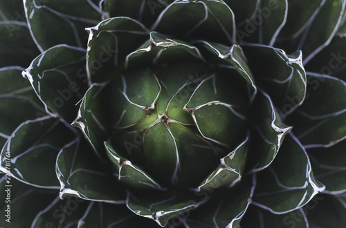 Closeup of a green succulent plant - 223781761