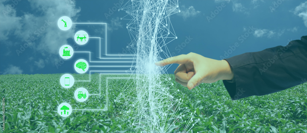 Fototapeta iot, internet of things, agriculture concept, Smart Robotic (artificial intelligence/ ai) use for management , control , monitoring, and detect with the sensor in the farm, field.
