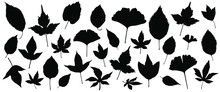 Set Of Silhouettes Of The 30 Autumn Leaves Vector Illustrations - Isolated On White Background