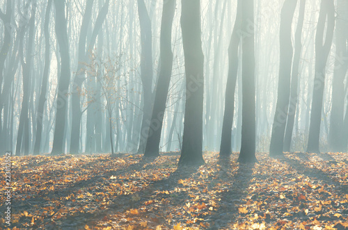 Papiers peints Forets Bare late autumn forest, beautiful fall season background