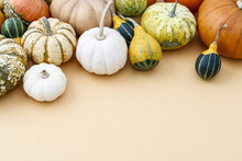 Group Of Colorful Pumpkins