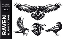 Raven Bird Collection - Vector...