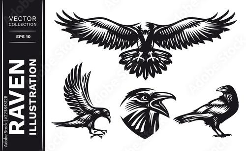 Obraz na plátně Raven bird collection - vector illustration, logo, emblem black and white, one color