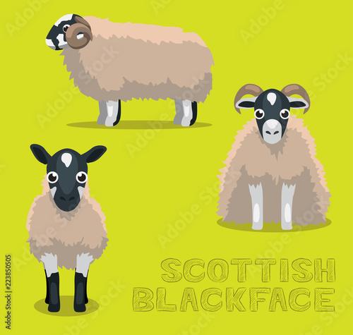 Sheep Scottish Blackface Cartoon Vector Illustration Wallpaper Mural