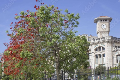 Fotobehang Nice Historic lycee Massena in Nice, France, with a colorful tree in the foreground