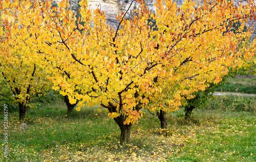 Staande foto Meloen Champ d'arbres fruitiers