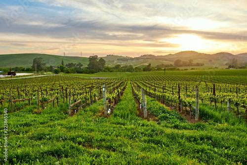 Keuken foto achterwand Verenigde Staten Vineyards at sunset in California, USA
