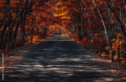 Fototapety, obrazy: Golden autumn in Russia. Road in the forest