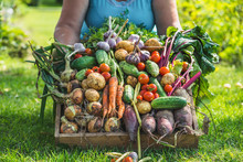 Farmer With Vegetables In The ...