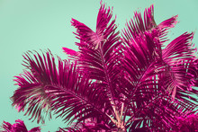Purple Palm Trees Silhouette Against Turquoise Sky. Natural Background. Toned Image, Filter Effect, Vibrant Colors.