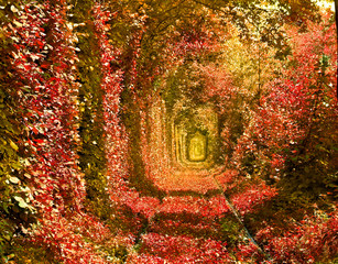 Fototapeta Romantyczny Railroad in autumnal forest formed a tunnel. Tunnel of love in Ukraine, Klevan