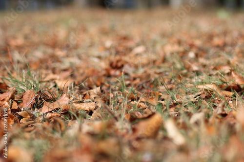 Fotografie, Obraz  Herbstboden 2