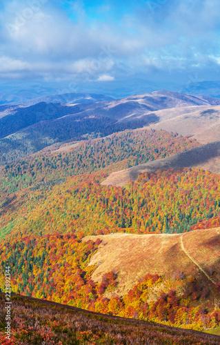 Obraz Colorful trees in the autumn mountains. - fototapety do salonu