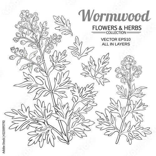 Photo wormwood vector set