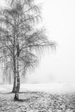 Drzewo we mgle - 223896738