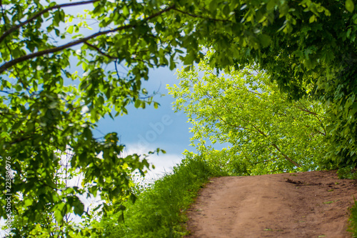 Fotobehang Bomen Beautiful view of the road, trees and blue sky with clouds – Kolomenskoye Park, Russia, Moscow