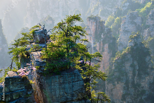 Zhangjiajie mountains, China Canvas Print