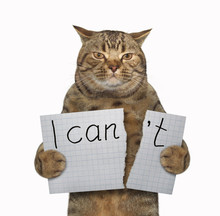 "The Cat Is Tearing A Piece Of Paper Where Writing The Phrase "" I Can't "". White Background."