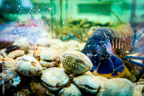 View from behind on blue crawfish for sale, sea crustaceans inside aquarium with clams in a restaurant