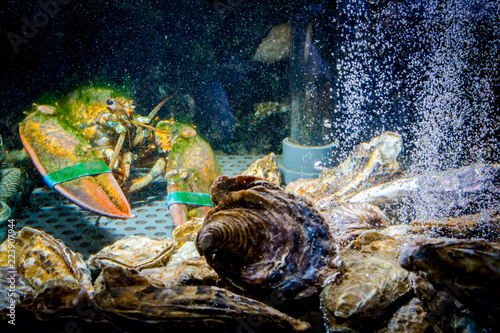 Colorful crawfish for sale, sea crustaceans with oysters inside aquarium in a restaurant
