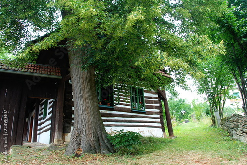 Traditional old timbered cottage with green windows hided behind big tree