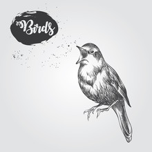 Hand Drawn Bird Sketch Isolated On White Background. Birds Sketch Elements Vector Illustration.