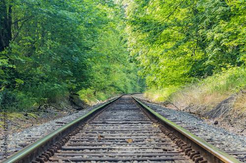 Poster Voies ferrées Forest Tracks