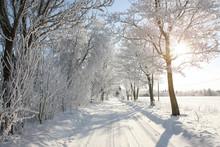 Gorgeous Wintery Snowy Tree-li...