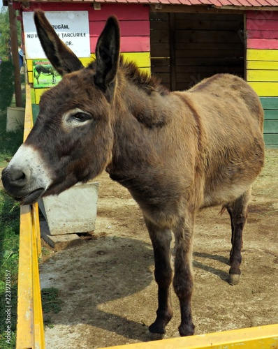Donkey out of the stable