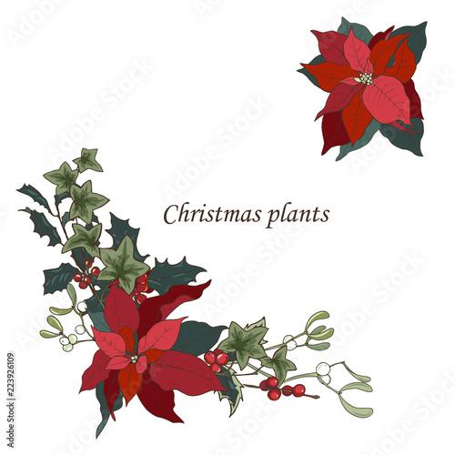Fotografie, Obraz  Composition of Christmas plants, poinsettia, Holly, cones, ivy and mistletoe, ve